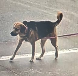 Dog allegedly involved in biting incident