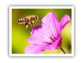 Picture Perfect Pollinator Photo Contest