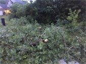 Local tree damage