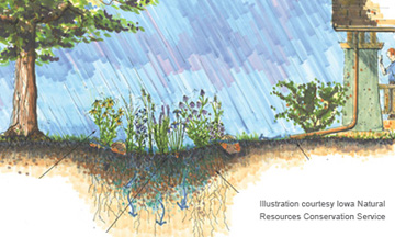 Dubuque, IA - Official Website - Rain Barrels and Rain Gardens